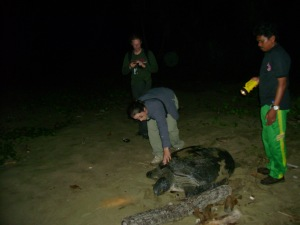 national park meru betiri sukamade turtle beach tour